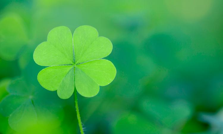 Luck gets unfolded …        ଭାଗ୍ୟଂ ଫଲତି ସବ଼ର୍ତ୍ର…..